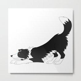 Black and White Border Collie Yoga  Metal Print
