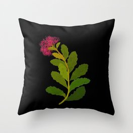 Sedum Telephium Mary Delany Vintage British Floral Flower Paper Collage Black Background Throw Pillow