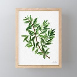 Leaves and Shadows Framed Mini Art Print