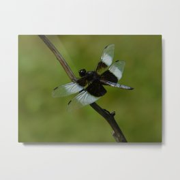 Daring Dragonfly Metal Print