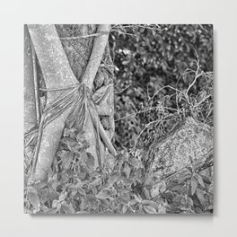 Strangler fig and boulder in the rain forest Metal Print