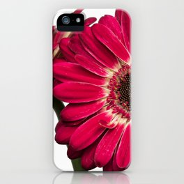 Gerbera Daisies on a White Background iPhone Case