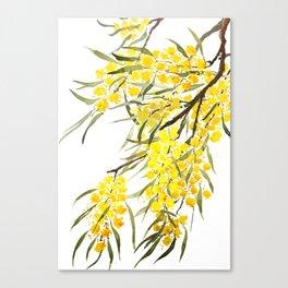 Godlen wattle flower watercolor Canvas Print