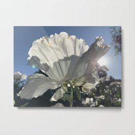 Beauty in White Metal Print