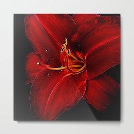 Red Lily On Black Metal Print
