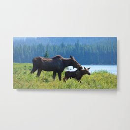 Mother moose & calf at Maligne Lake in Jasper National Park Metal Print