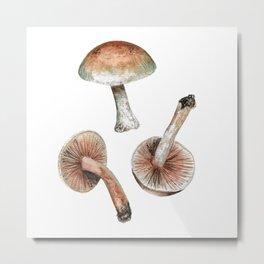 Hongo (Hebeloma nudipes) Metal Print