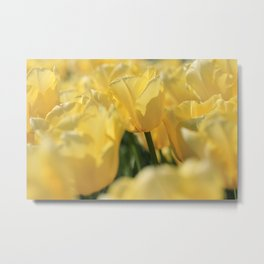 Yellow Tulip Field Metal Print