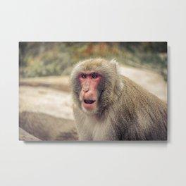 Japanese Snow Monkey Watching Lincoln Park Zoo Metal Print