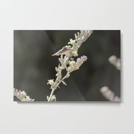 Hummingbird Hovering over Hesperaloe Parviflora Flower on Black Metal Print