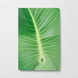 Palm CR Metal Print