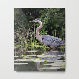 Heron pose in the channel Metal Print