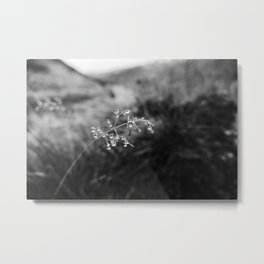 Exmoor VIII Metal Print