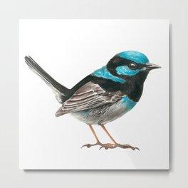 Fairy wren bird Metal Print