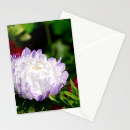 aster with water drops in autumn Stationery Cards