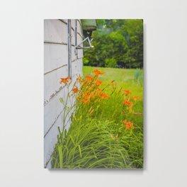 Farmhouse Lilies, North Dakota 5 Metal Print