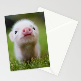 Little Pig Stationery Cards
