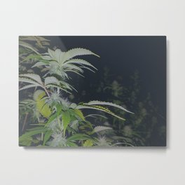 Organic Green Fields Forever 420 Edition Metal Print