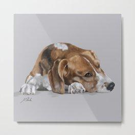 Beagle Resting Metal Print