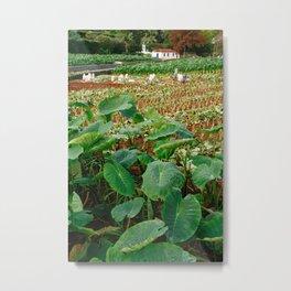 Taro field Metal Print