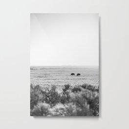 Roaming Bison Metal Print