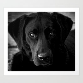 Loyalty  Black Lab  Art Print