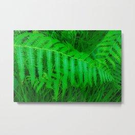 Fresh green fern Metal Print