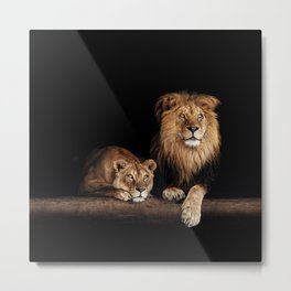 Happy lion and lioness on the log. Beautiful animal photo on dark background Metal Print