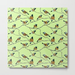 Black-Throated Finches Metal Print