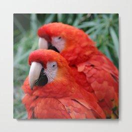 Red Scarlet Macaw Metal Print