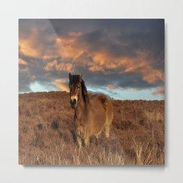 Horse on the moors Metal Print