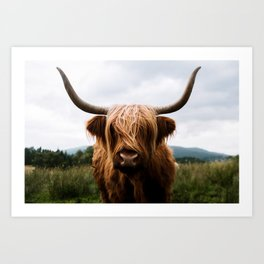 Scottish Highland Cattle in Scotland Portrait II Kunstdrucke