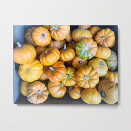 Pile of Mini Pumpkins for sale Metal Print