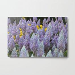 Australian Foxtail Flower Metal Print