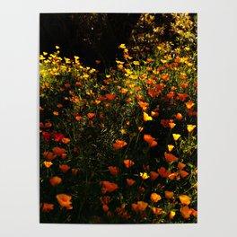 Beautiful garden flowers Poster