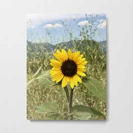 Mountain Sunflower  Metal Print