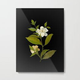 Gardenia Florida Mary Delany Delicate Paper Flower Collage Black Background Floral Botanical Metal Print