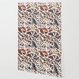 Moths of North America Pattern Wallpaper