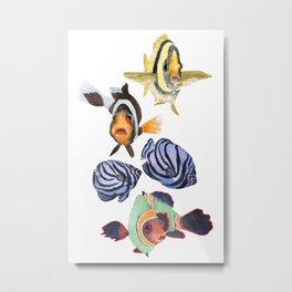 Tropical fish social Metal Print