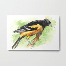 Watercolor Baltimore Oriole Bird Metal Print