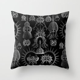 Ernst Haeckel - Spyroidea Throw Pillow