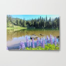 Lupine & Lake Metal Print