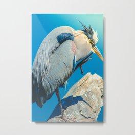 Great blue heron portrait photograph Metal Print