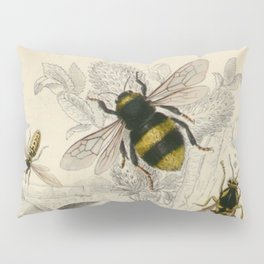 Naturalist Bee And Wasps Pillow Sham