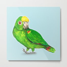 Panama amazon parrot Metal Print