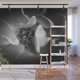 blooming rose with pollen in black and white Wall Mural