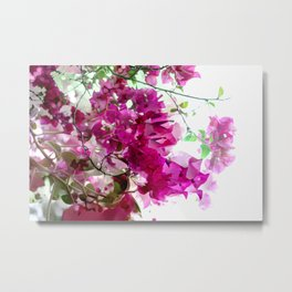 Bougainvillea Blooms Abstract Metal Print