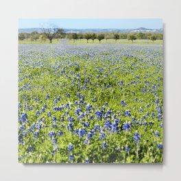 Texas Bluebonnets Metal Print