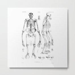 Vintage Gorilla Skeleton Metal Print
