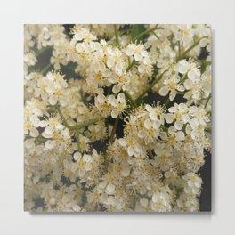 flower and light - White flower 4 Metal Print
